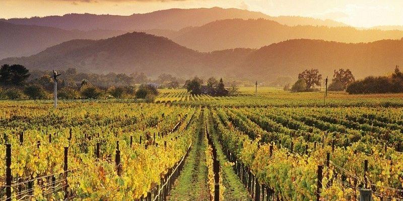 Экскурсии на винодельни Испании: чего ожидать туристу?